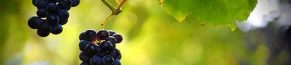 wino czerwone wegierskie